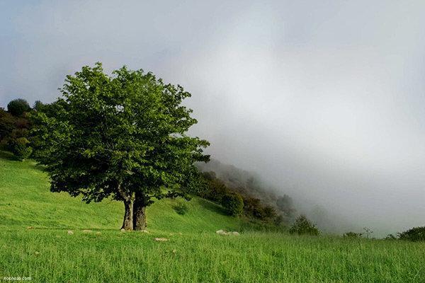 اضافه کاری جنگل های حاره ای برای ادامه حیات در زمین