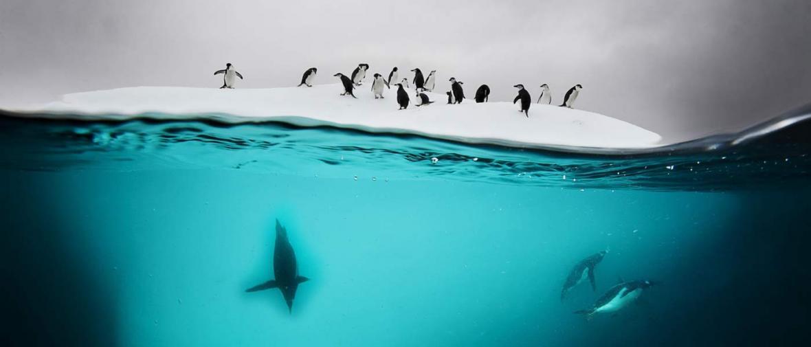 گشتی در قاره قطب جنوب