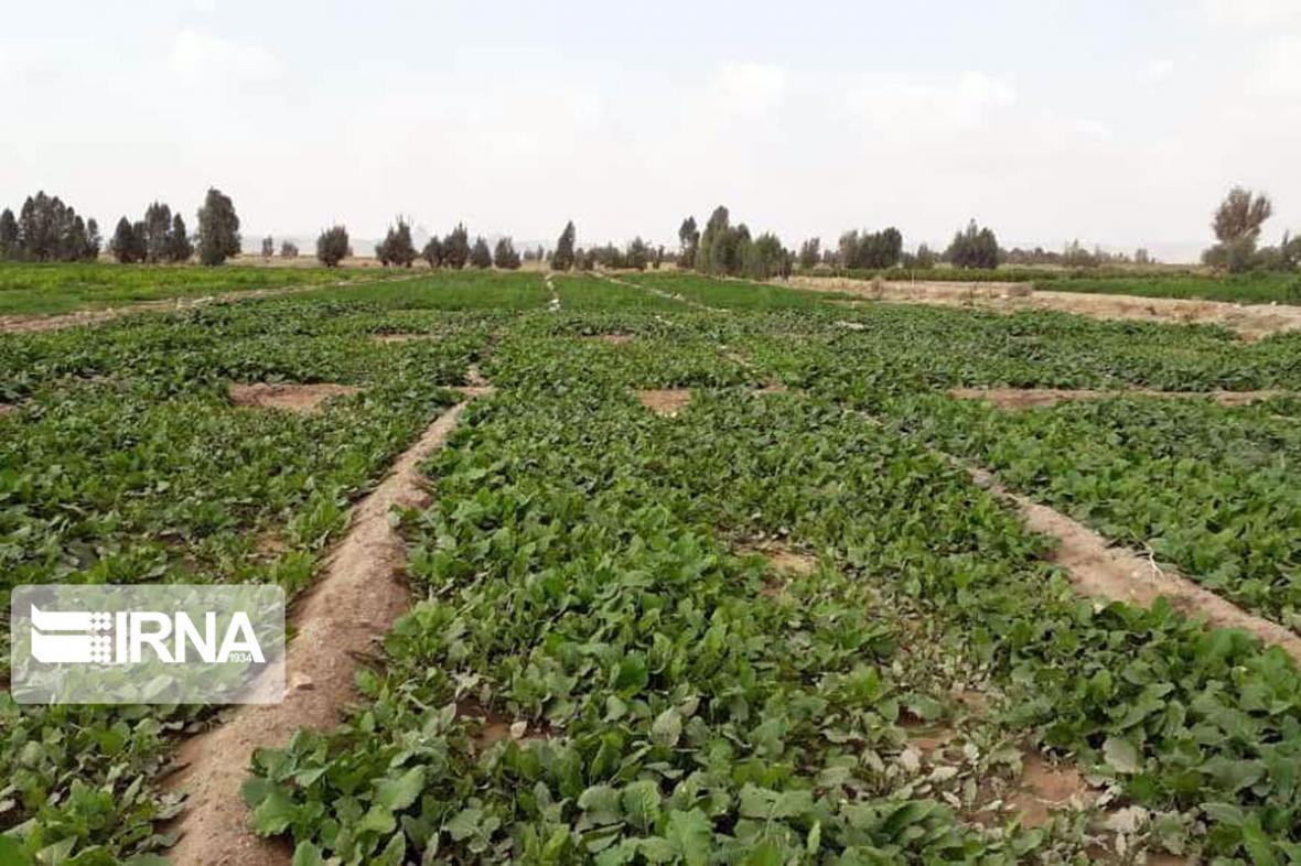 خبرنگاران 68 سبزی کار متخلف به دستگاه قضایی کردستان معرفی شدند